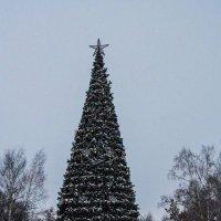 елка 2017:) :: Юлия Денискина