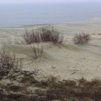 Песчаное море и Балтийское море :: Марина Домосилецкая