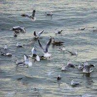 Кто-то ловит янтарь, а чайки - чем бы поживиться :: Маргарита Батырева