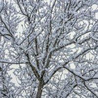 А вчера шел снег :: Игорь Сикорский