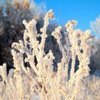 Зимы цветы.. :: Андрей Заломленков