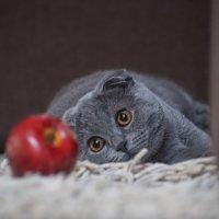..в этом запретном плоде нет червей сомнения...., он с ёлки .. :: Лилия .