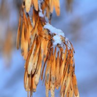Зимние серёжки. :: Paparazzi