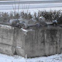 пережить бы морозы....тяга к теплу :: Михаил Жуковский