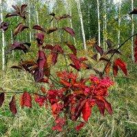 осенние листья :: Александр Прокудин