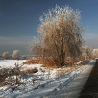 Только Новый год пришёл... :: Александр Попов