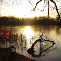 Утром на озере :: Маргарита Батырева