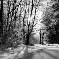 Зимний свет.. :: Андрей Заломленков