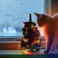 *С Рождеством друзья! /Белка./ :: Виталий Виницкий