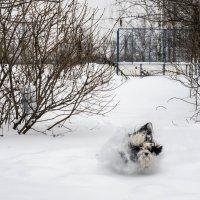 преодоление трудностей, Бия не ищет легкий путей :: Лариса Батурова