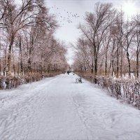 Аллея в парке им. Ю. А. Гагарина. (пос. Комсомольский) :: Anatol L