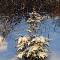 Рождественский сочельник :: Андрей Лукьянов
