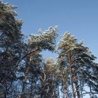Посмотрите вверх - там красиво! :: Владимир Безбородов