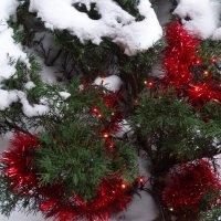 Рождественский сюжет... :: Тамара (st.tamara)