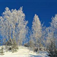 Зимние наряды :: Leonid Rutov