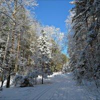 После снегопада :: Leonid Rutov