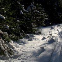 Охотничья тропа :: Валерий Чепкасов
