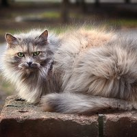 Суровый кот :: Ксения Базарова