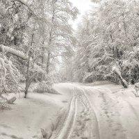 Черно-белый лес :: vladimir Bormotov