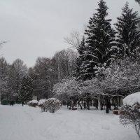 Зимний парк в городе Коломна. :: Ольга Кривых