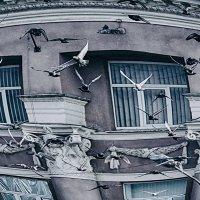 Дивный полёт :: Игорь Касьяненко