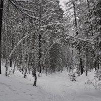 После снегопада. :: Сергей Адигамов