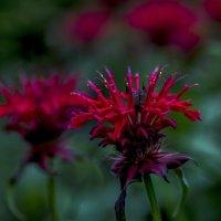 огненный цветок :: gribushko грибушко Николай