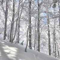 Танцующий лес... :: Светлана Игнатьева