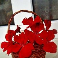 Корзиночка с цветами герани :: Нина Корешкова