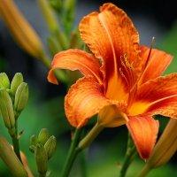 Как радуется женщина цветам... :: kolin marsh