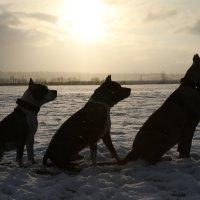 Три северных сфинкса :: Ольга ОК Попова