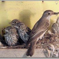 Прощание с гнездом. :: Дмитрий Строганов