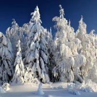 Утро в Рождествинском лесу :: Анатолий