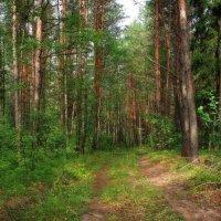 Прогулка в лето... :: марк