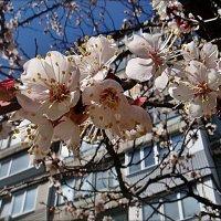 Мечтаю о весне... :: Нина Корешкова