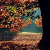 Опустел тот клен, в поле бродит мгла. А любовь как сон, стороной прошла. :: Юрий. Шмаков