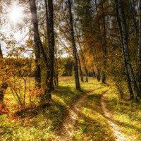 В лесу :: Igor Yakovlev