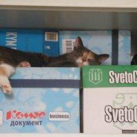 Хорошо спится. :: Татьяна
