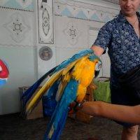 Попугай :: Тоня Просова