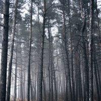 Туман :: Мария Панькина
