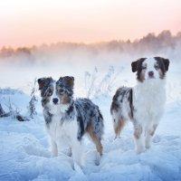 Мороз и солнце :: Диана