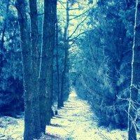 Лесной пейзаж :: mAri