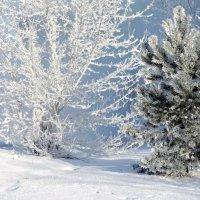 Морозный денёк. :: Hаталья Беклова