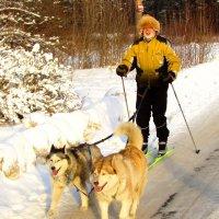 Лыжная упряжка :: Андрей Снегерёв