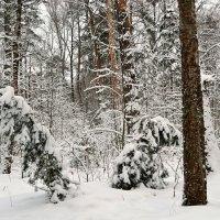 В Рождественском лесу :: Милешкин Владимир Алексеевич