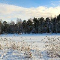 В январе на озере :: Милешкин Владимир Алексеевич