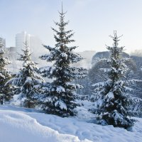 Рождественские ёлки. :: Андрей Синицын