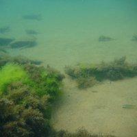 Отдых на море, Крым. Скнорлинг. Подводные пейзажи-62. :: Руслан Грицунь