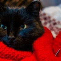 Котя любит вязаные вещи))) :: Ирина Антоновна