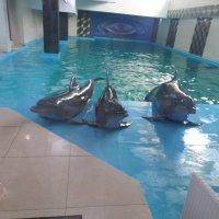 Дельфины позирующие. :: Владимир
